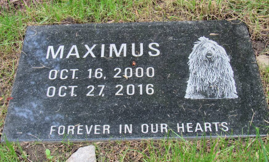 Maximus, a beloved Spanish Water Dog, was the first pet to be buried at The Laurels at West Laurel Hill. | Provided
